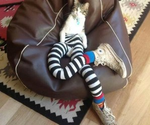 Top 10 Best Images of Cats in Tights