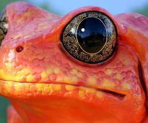 Ten of the Worlds Most Unusual and Amazing Frogs and Toads