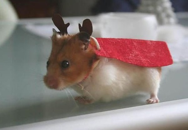 Hamster Dressed as a Reindeer
