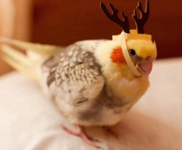 Bird Dressed as a Reindeer