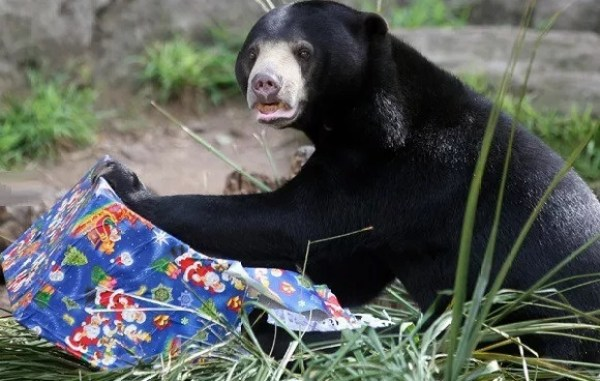 Bear With a Christmas Present