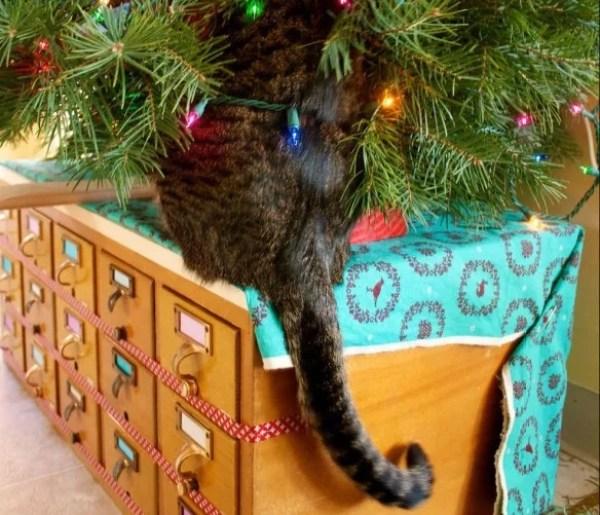 Cat Climbing Christmas Tree