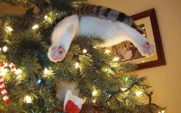 Cat Climbing Christmas Tree