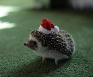 Ten Pictures of Animals in Santa Hats for Some Festive Cheer