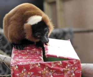 Top 10 Images of Animals Opening Presents