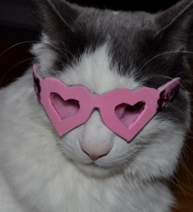 Cat in a heart shape Glasses