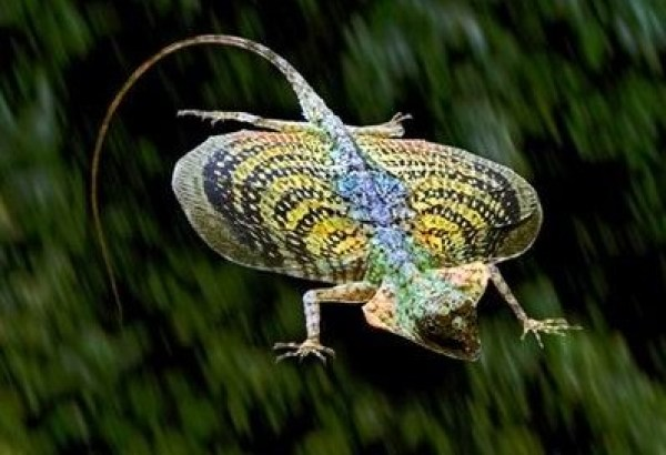 Top 10 Strange and Unusual Flying Animals