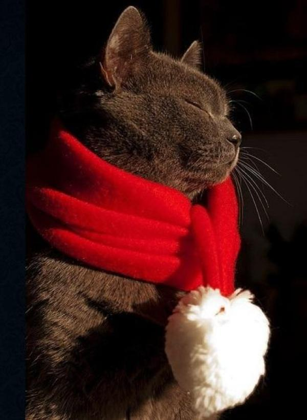 Cat Wearing Red Santa Scarf