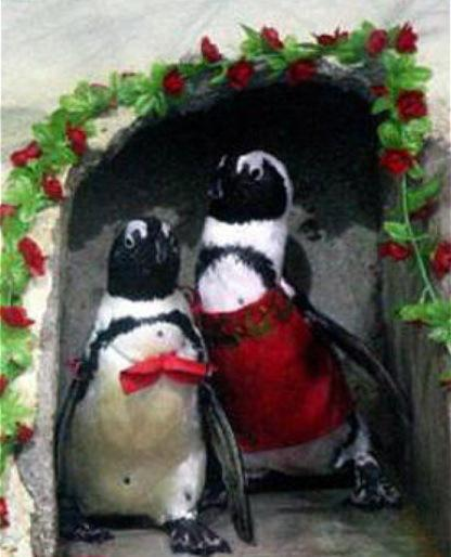 Penguins Getting Married