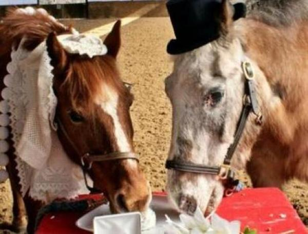 Horses Getting Married