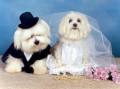 Dogs Getting Married