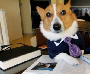 Ten Pictures of Dogs Dressed as Lawyers Who Will Sue You for Bones!