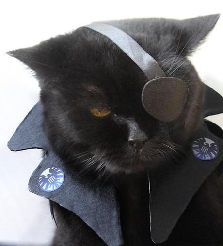 Superhero Cat Inspired By Nick Fury