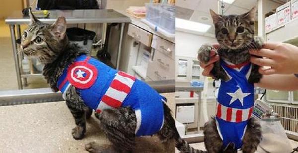 SuperheroCat Inspired By Captain America