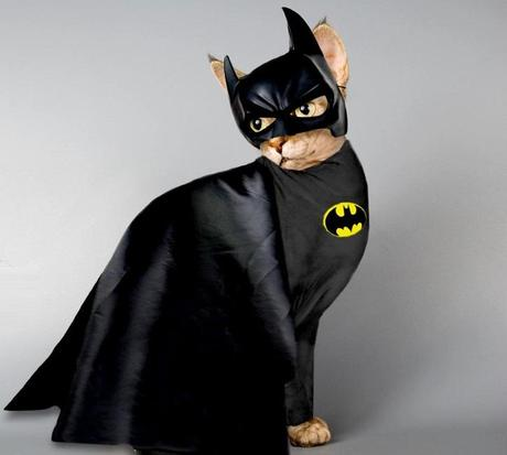 Superhero Cat Inspired By Batman