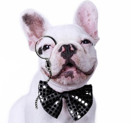 Dog Wearing a Monocle