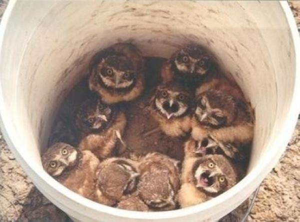 Owls in a Bucket