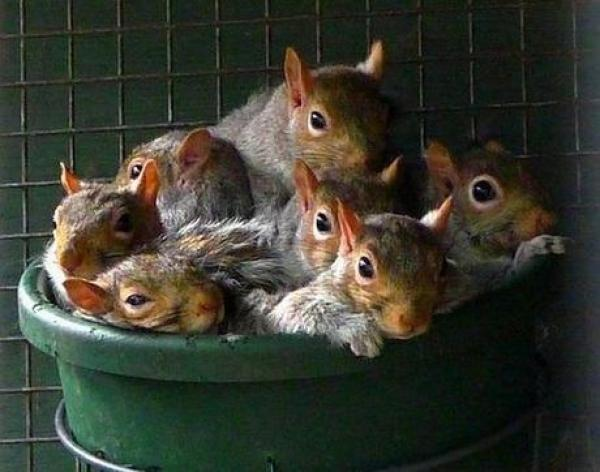 Squirrels in a Bucket