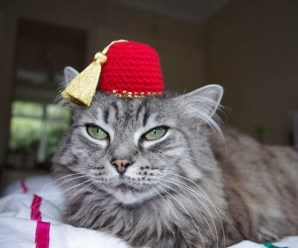 Ten Pictures of Cats Wearing a Fez Who Make It Look Fashionable