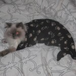 Top 10 Best Images of Mermaid Cats