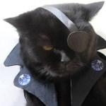 Top 10 Best Cosplay Superhero Cats