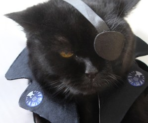 Top 10 Best Cosplay Superhero Cats