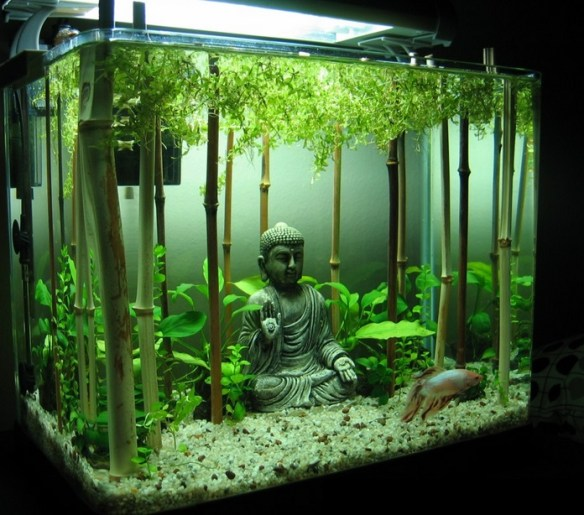 Top 10 amazing and unusual themed fish tanks for Good fish for small tanks