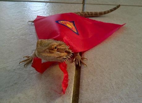Lizard in a Superman Costume