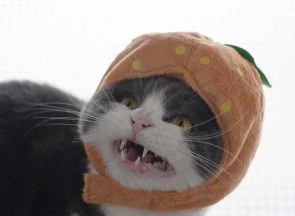 Cat Dressed as Sour Fruit