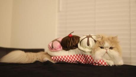 Cat Dressed as Banana Split Sundae