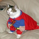 Top 10 Animals Dressed Like Superman
