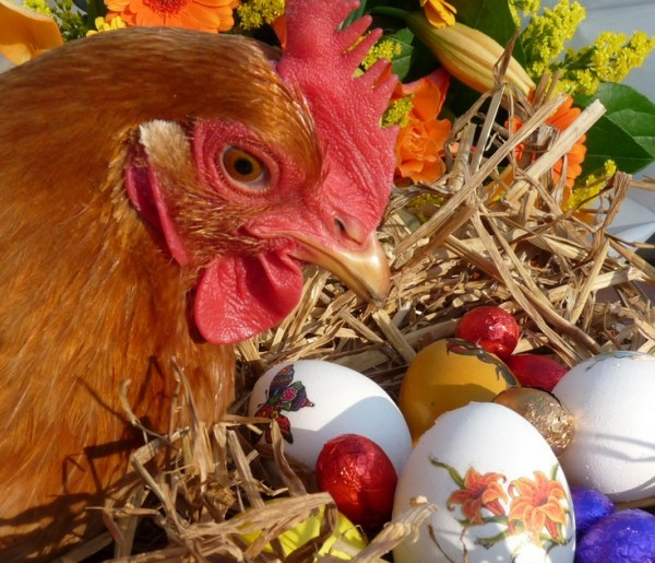Top 10 Images of Animals With Easter Eggs