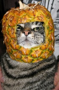 Cat Wearing a Helmet Made From Pineapple