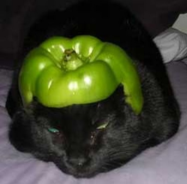 Top 10 Cats Wearing Helmets Made of Fruit