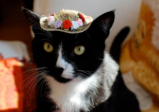 Top 10 Funny Images of Cats in Tiny Hats