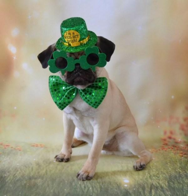 Saint Patrick's Day Dog
