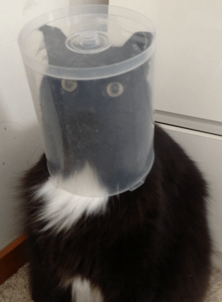 Top 10 Images of Cats who Want to be Astronauts