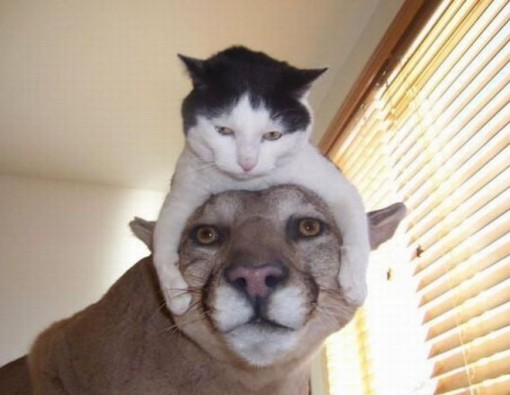 Top 10 Images of Cats Riding Animals