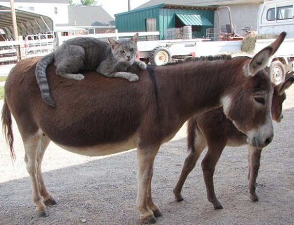 Top 10Images of Cats Riding Animals