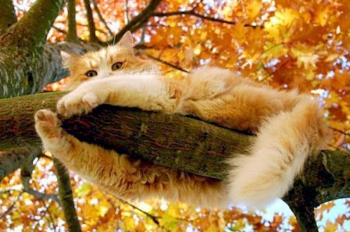 Top 10 Best Images of Cats in Trees