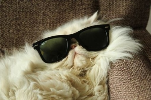 Top 10 Laid Back Cats
