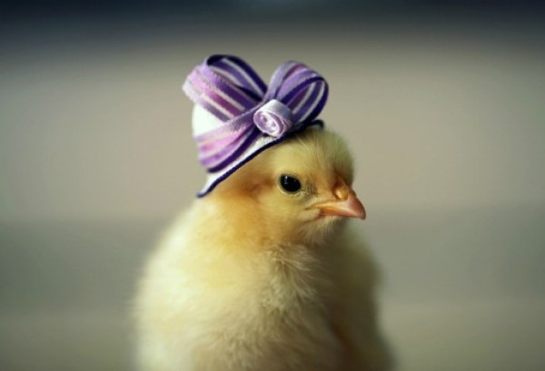 Ten of the Cutest Chicks in Hats You Will Ever See in Your Life!