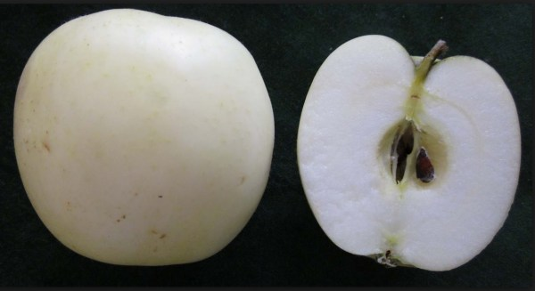 Top 10 Strange, Rare and Unusual Apples