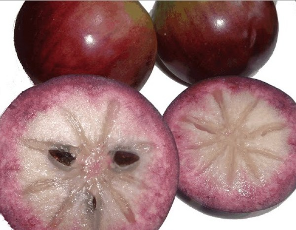 Jamaican Star Apple