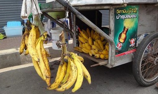 Top 10 Strange, Rare and Unusual Bananas