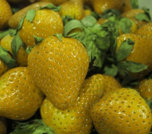 are strawberries a fruit strange fruit