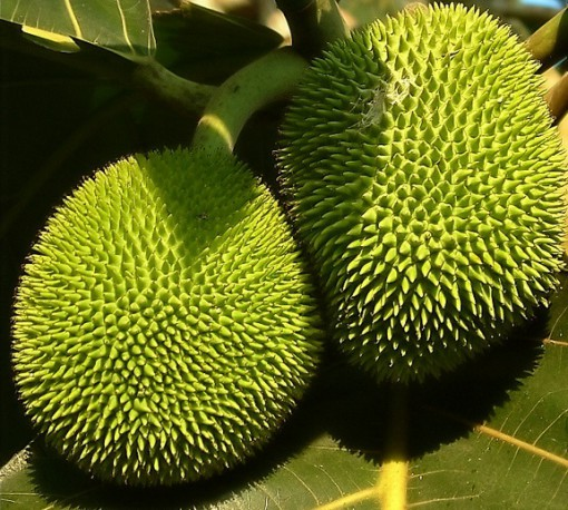 Top 10 Strange and Unusual Fruits