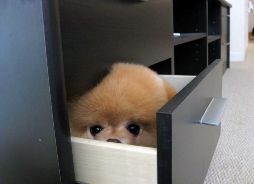 Dog Hiding in a Draw