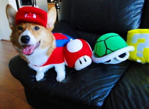 Top 10 Funny Images of Nerdy Dogs
