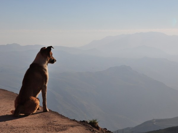 Top 10 Images of Deep Thinking Dogs
